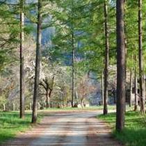 【夏】木立の中を抜ける宿までのアプローチ。自然を全身で感じながら少し遠くまで足を延ばしてみるのも