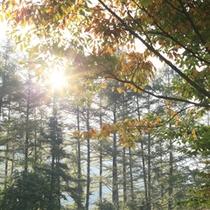 【周辺散策】自然豊かな唐松林では、四季折々の木々の変化を目にすることができる。冬の雪景色もまた美しい