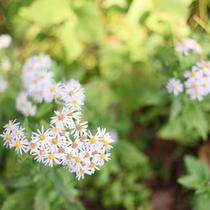【周辺散策】ゆったりとした時間の中だからこそ、普段気に留めることのない小さな草花の美しさにも気づく
