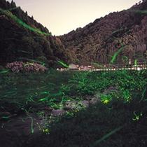 兵庫県のゲンジボタル保護区に指定されている養父市奥米地「ほたるの里」