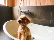 【楠】愛犬専用お風呂でワンちゃんも至福のひとときを。