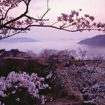 春には、桜と雲海の幻想的な風景が広がる