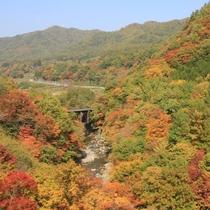 とっても綺麗な紅葉です!ぜひ、開田高原へ見に来て下さい♪