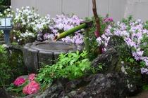 庭園~春~