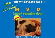 2月MVD