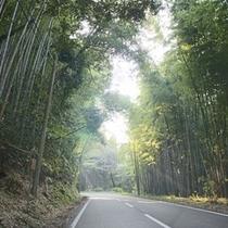 ③林の中のクネクネ山道を進んでいただきます。