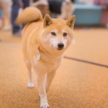 ◆全館、わんちゃんフリー◆廊下だってそのまま大丈夫ケージ不要で一緒に歩けます!