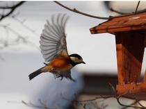 Bird Watching を楽しみましょう!