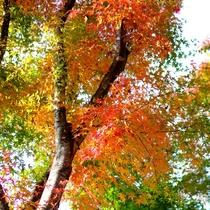 付近の紅葉