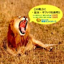 【群馬サファリパーク】割引券付きプランが好評!迫力ある動物達でお仲間お子様もドキドキワクワク♪