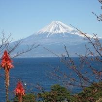 富士山とアロエ