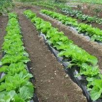 スタッフのお家の無農薬畑・・「マリン農園」