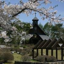 桜の似合う教会