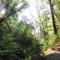 皇子原公園には霧島連山の麓にある豊かな自然があります。