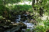 正面を流れる小川