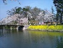 高田公園の桜(極楽橋)
