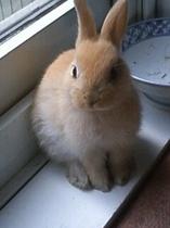 玄関でウサギがお出迎え!