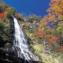 天滝 日本の滝100選に選ばれている落差98mの名瀑(約1.2kmの登山道をのぼりが必要です)