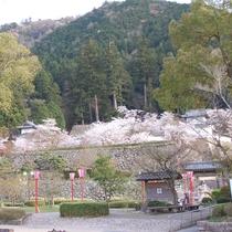 出石(いずし) 春のシーズンには、出石城跡の桜もおすすめです!