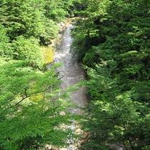 新緑の雪輪の滝