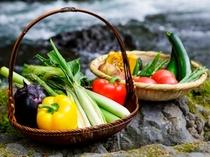 地場の逸品/富士山麓の新鮮野菜