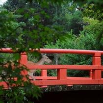 ■もみじ橋と鹿