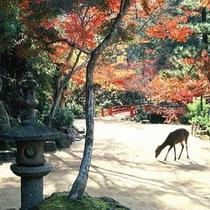 ■玄関先の紅葉と鹿