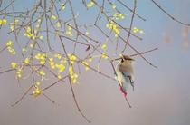 野鳥撮影が趣味のオーナー