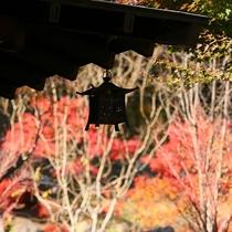 外灯と紅葉の美しいコントラスト