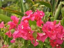 【中庭】色鮮やかな花