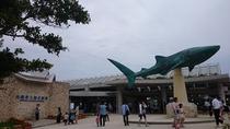 美ら海水族館(車で5分♪)