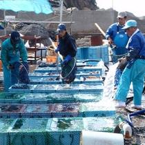 *「セリの鑑札」を所持!新鮮で良い魚介類を仕入れております