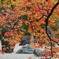 高野山・金剛峯寺の紅葉の様子