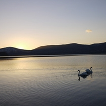 *山中湖からの景色/しんと静まり返った湖に浮かぶ二羽の白鳥。美しい光景に心洗われるひととき。