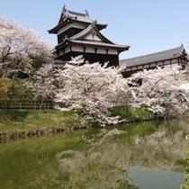郡山城(桜)