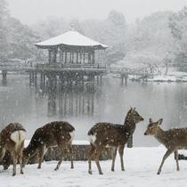 浮見堂 雪