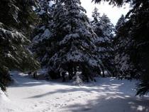 雪上ハイク〜風景の一部になれるんです