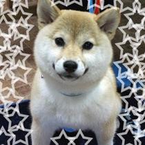 お客様犬♪