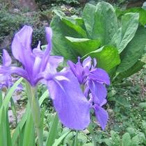 *【周辺】美しい花を愛でながら周辺散策もおすすめ!