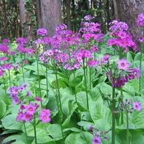 *【周辺】季節によって変わる花々の姿をお楽しみ下さい。