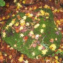 *【紅葉イメージ】秋になると木々の葉が美しく色づきます。
