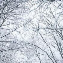 【玄関先がゲレンデ】白銀の世界でスキーを楽しもう♪