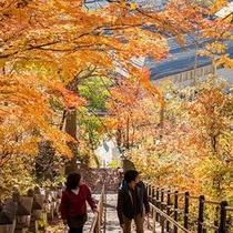 ホテルから徒歩5分!酢川温泉神社で紅葉散策♪
