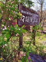 季節の花と看板