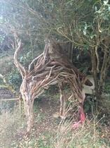 流木のラクダ