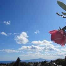 ■薔薇と大島