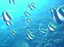 ダイビング魚と一緒に泳いで!