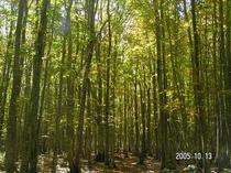秋の二次林