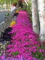 花と芝生〜花壇