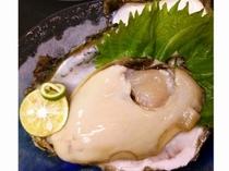 太平洋の岩カキ